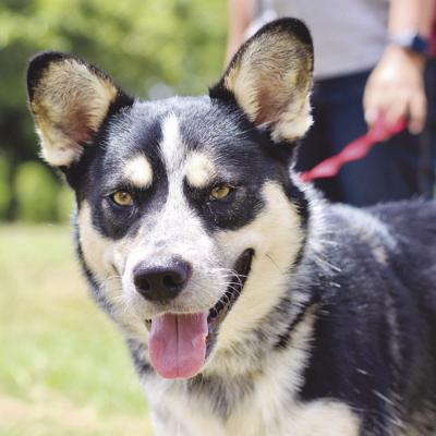 Pet of the Week: Cash the Cattle Dog
