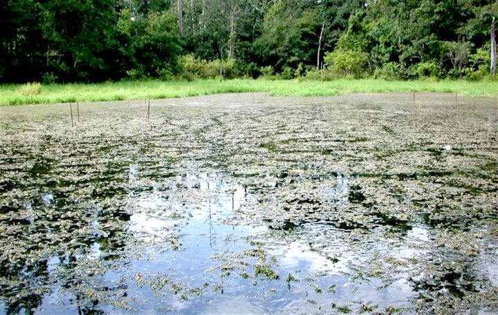 Pond and lake management webinars