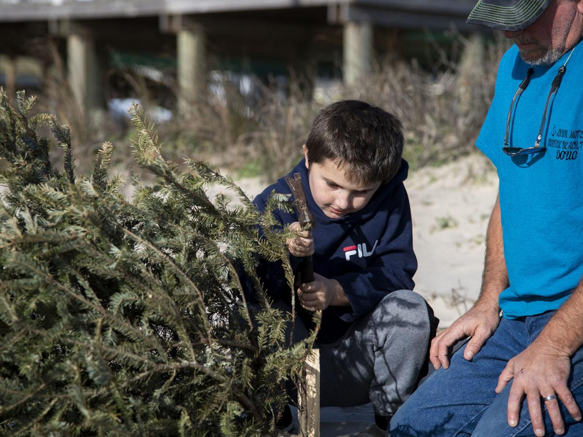 Volunteers lacking, but trees plentiful for Dunes Day