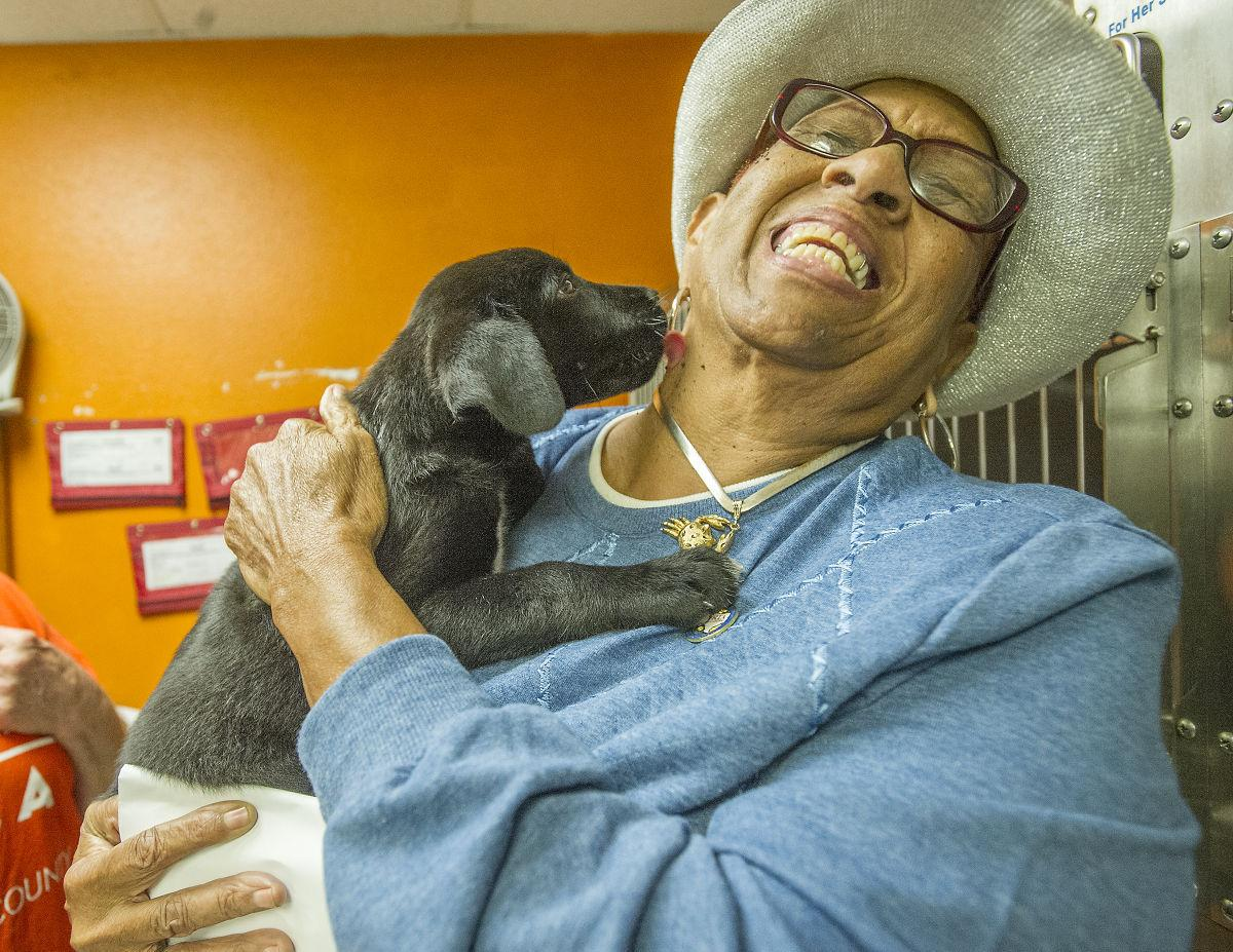 SPCA hits 500 adoptions during three-month period with Black