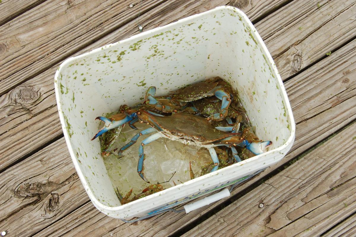 Blue Crab Fishing