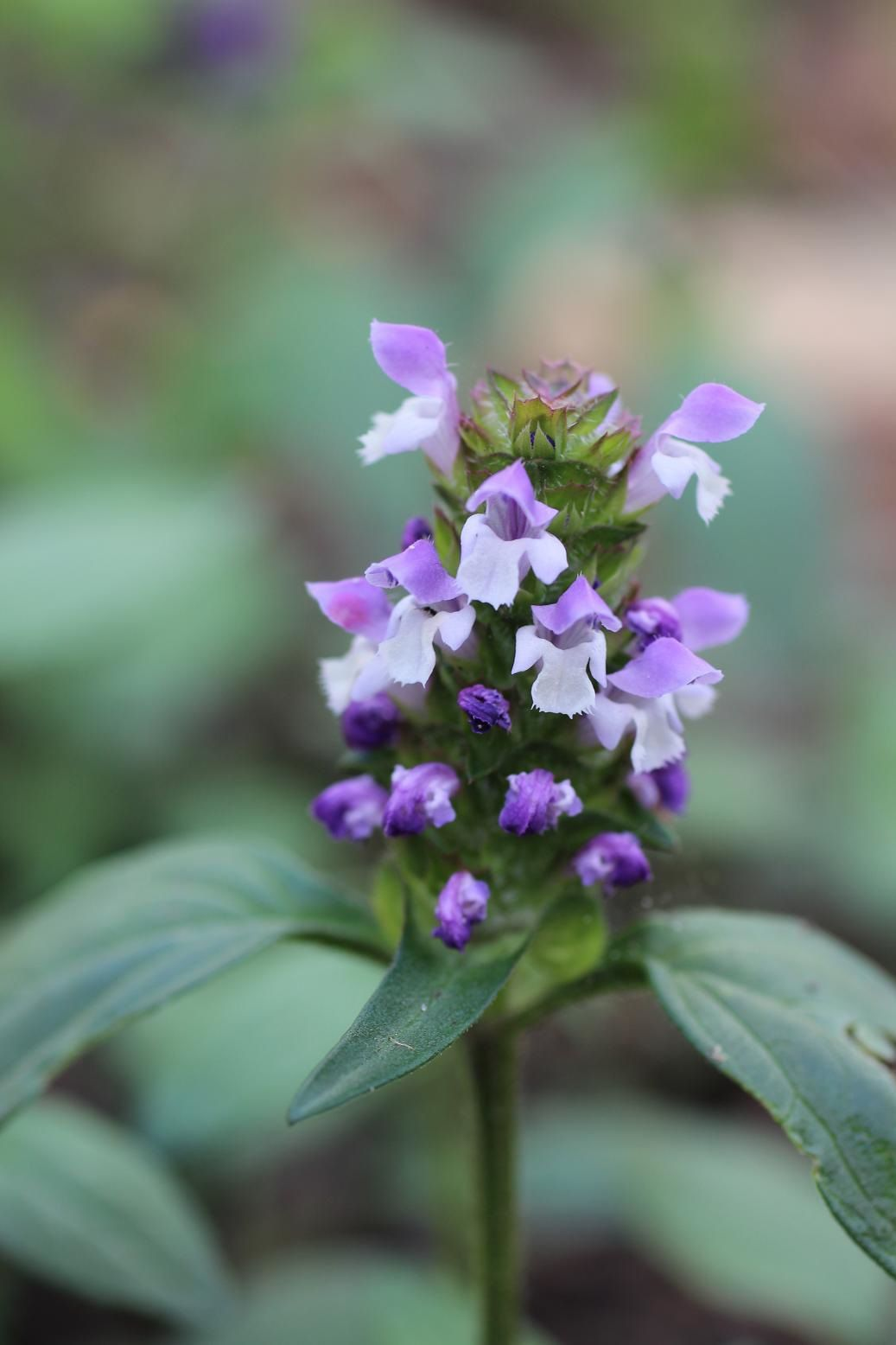 CommonSelfheal1