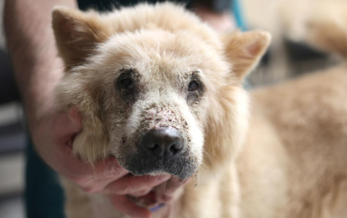 Community raises money to support neglected dogs