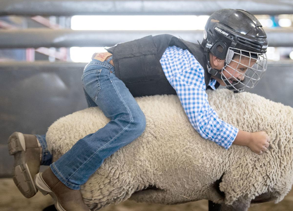 County Fair Mutton Bustin'