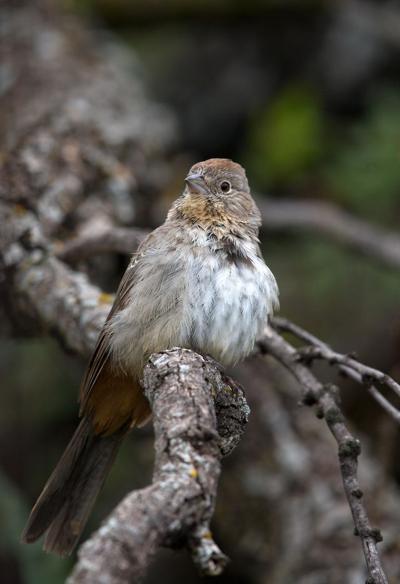 NATURE NOTES: Winter Bird Adaptations