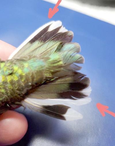 NATURE NOTES: Hummingbird Fun Facts #2