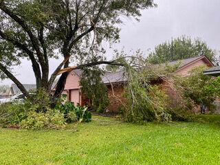 Hurricane Nicholas - House and fallen tree