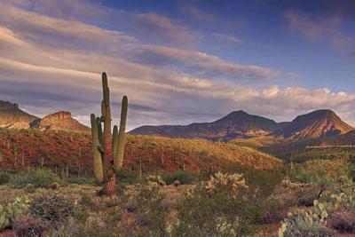 Desert Foothills Land Trust
