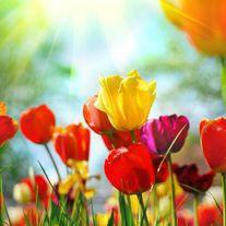 flower file photo