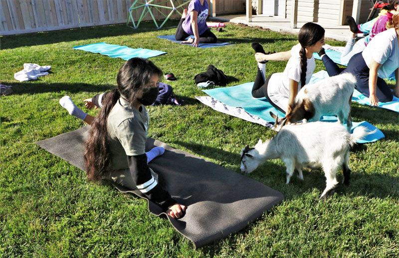 Goat yoga - Success Academy