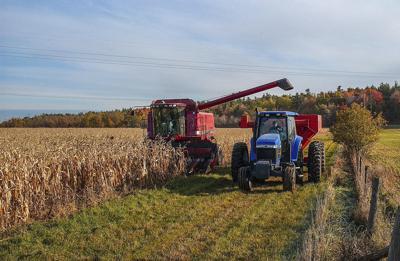 Harvest_corn_2020