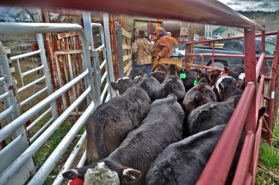 Rule exempting farms, ranches from reporting animal waste emissions implemented