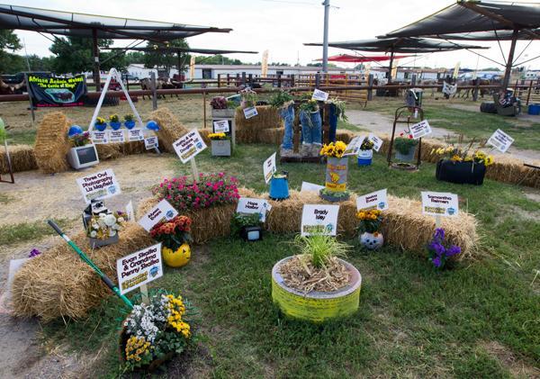 Roses In Garden: Nebraska State Fair Honored For Environmental Efforts