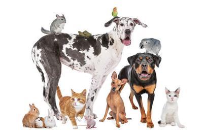 FILE PHOTO animals