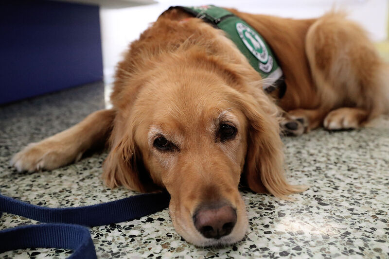 GICC therapy dog