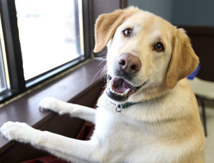 Image of: Volunteer Marley Is One Of The Dogs Adopted From The Central Nebraska Humane Society In 2018 Animal Adoptions Are Estimated To Be Up From The Previous Year Humane Society Says Pet Adoptions Were Up In 2018 Local News