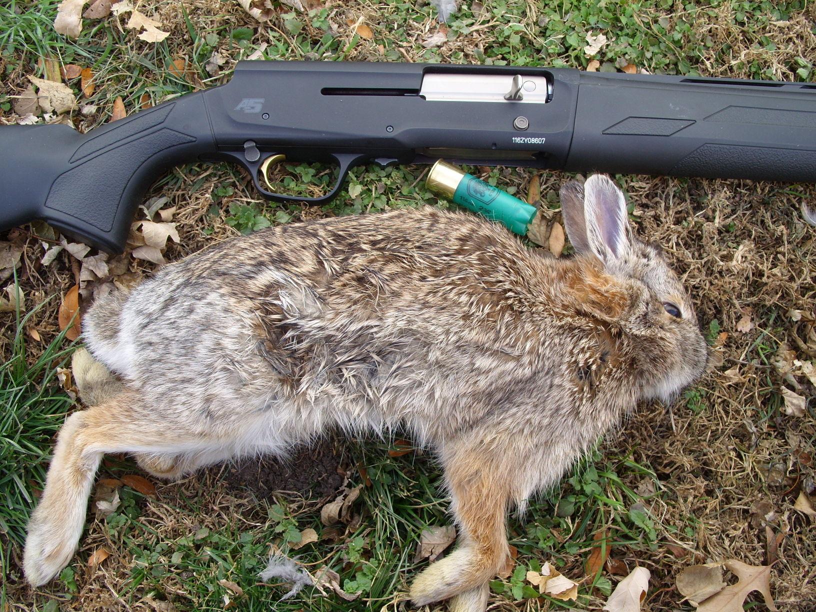new grad nurse cover letter%0A rabbit hunting
