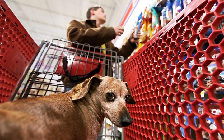 Petsense Dog Food