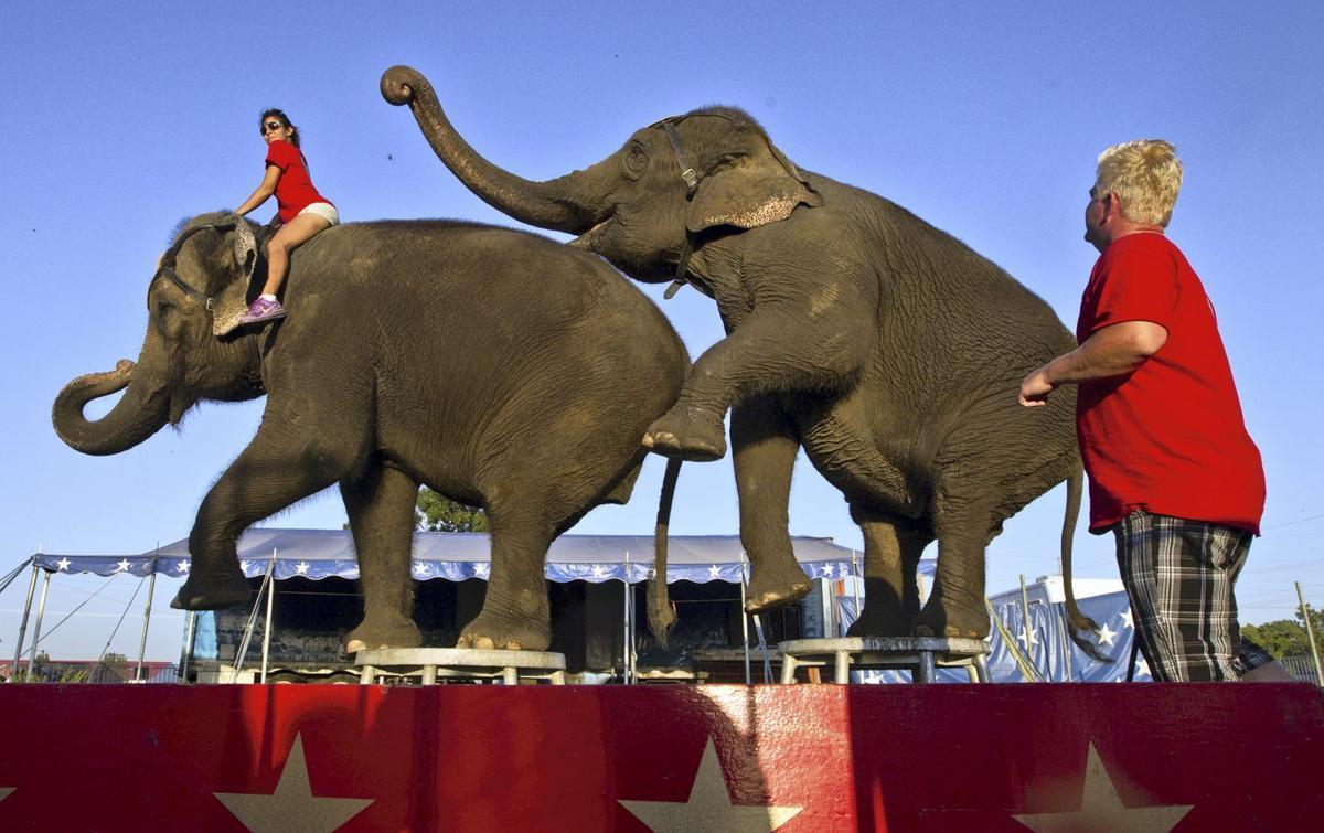 Don't ignore the elephants at the fair | Local News