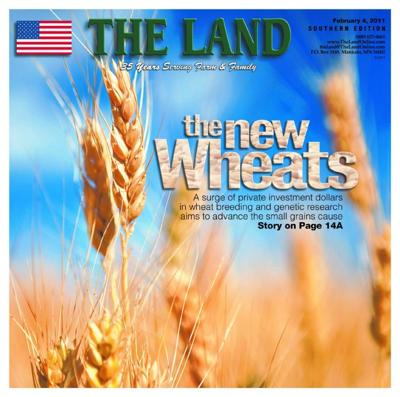 Cover story: The new wheats
