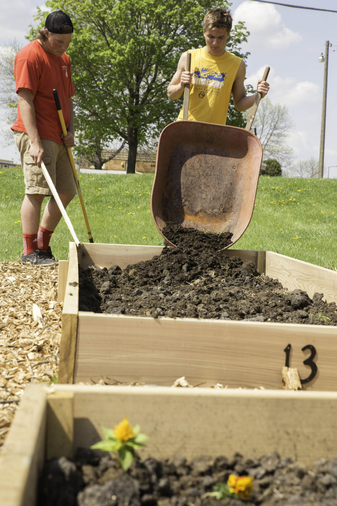 Boy Scouts help with garden