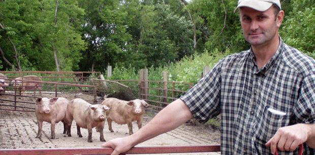 Pork raised, processed on-site at Fox Farm Pork