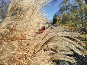 In the Garden grasses