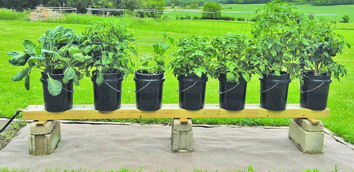 bucket gardening. In The Garden Bucket Gardening E