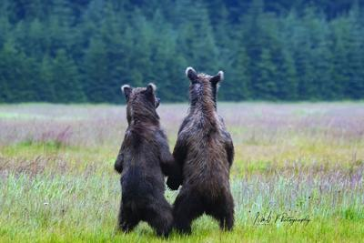 Grizzly Friends1
