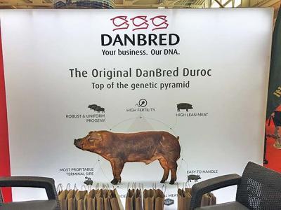 pork expo danbred display