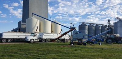 Industrial hemp needs more demand, processors   News