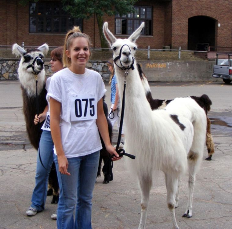 Lamas make the leap to State Fair 4-H show