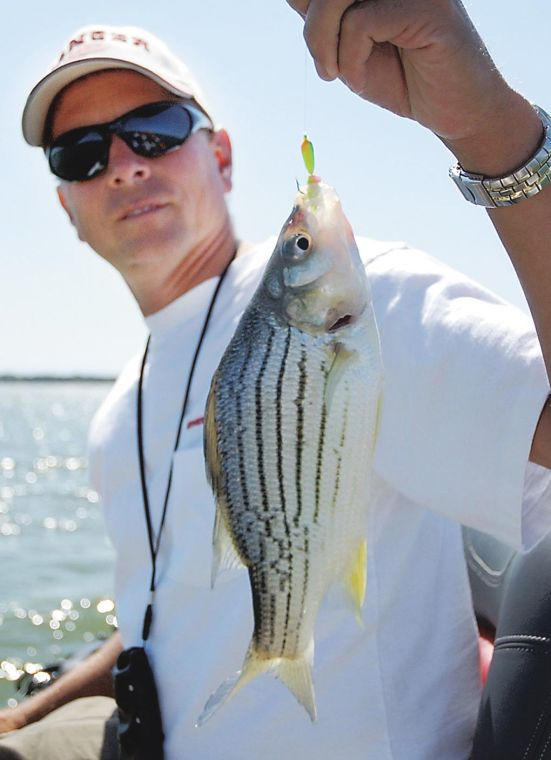 The Outdoors: Yellow bass fish provides good fight, good eating