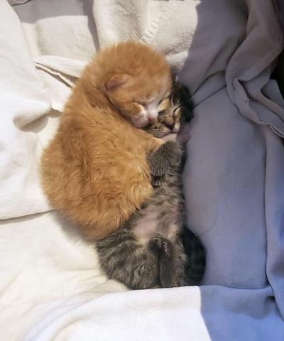 Rescued kittens 5
