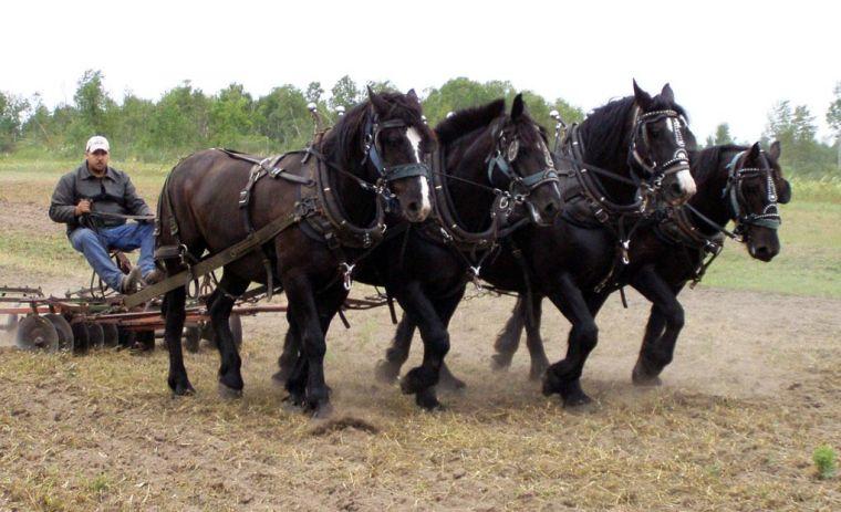 Back Roads: Silent horsepower