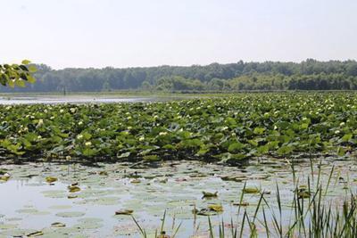 Still working to restore Grand Marsh