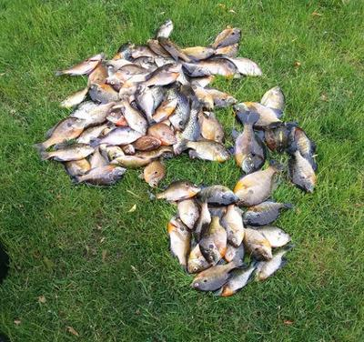 Plethora of panfish on inland lakes