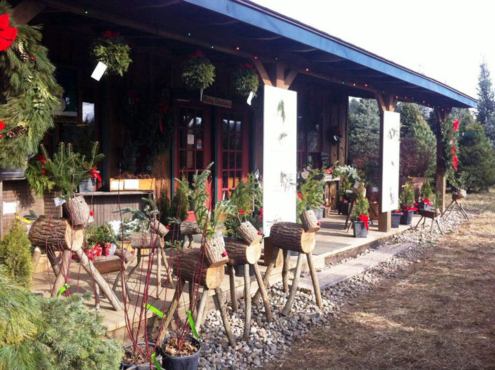 Locally-grown Christmas trees