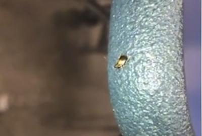 Bug at school not an 'infestation'