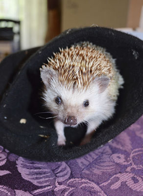 Prickly but lovable