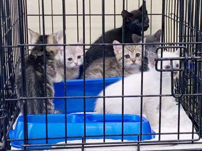 27 cats abandoned at local shelter