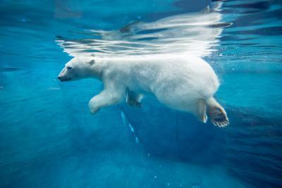Polar Passage
