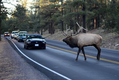 H_elk road Noel Reynolds.jpg