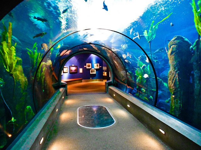 Newport Beach Aquarium Best Accent Chairs And