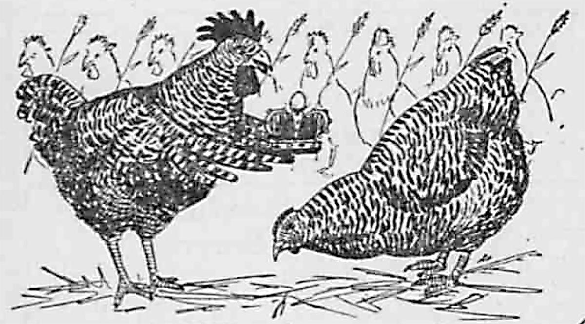 chickenArt-PMO1.jpg