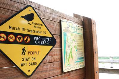 Plover Nesting Sign, Siuslaw National Forest.jpg
