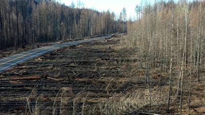 Aerial -burned forest 1.jpg