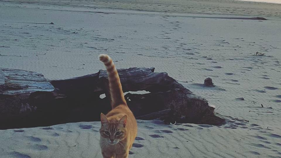 Prowling the beach, Submitted by Guinevere Anne Crispin