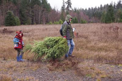 Holiday Tree.tif