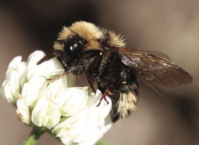 USDA details ways to protect pollinators for Virginia National Pollinator Week